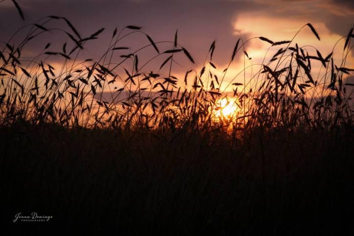 Jenna Domingo Photography - Horizon Photo Winner